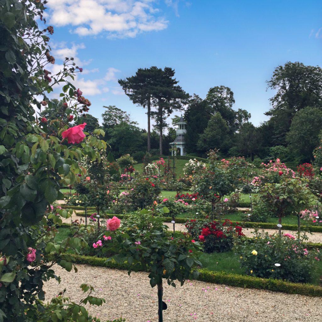 Bagatelle roses