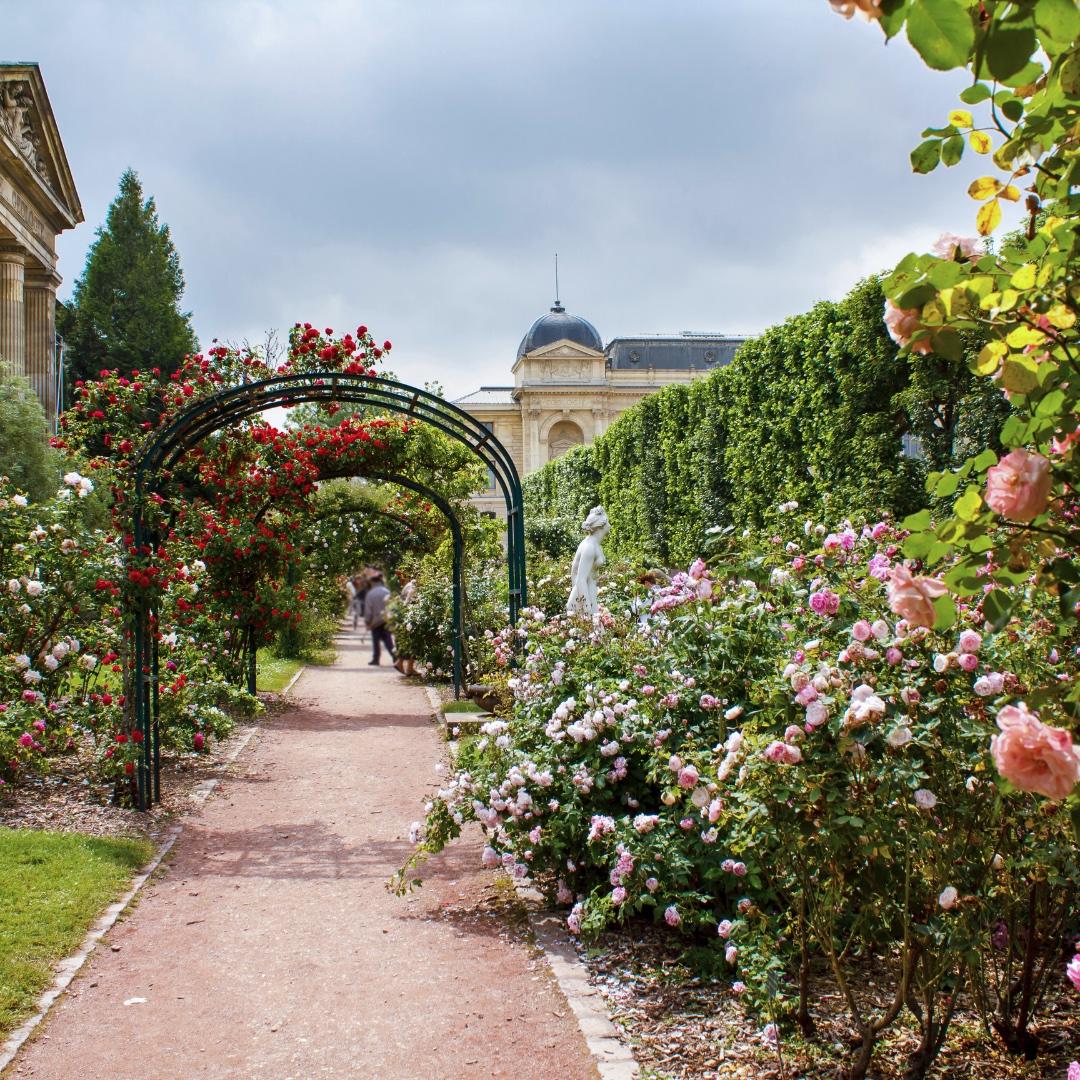 Jardin-des-Plantes-roses2