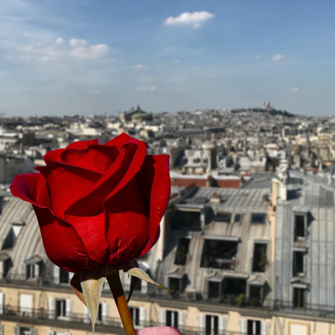 Rose-Paris-View
